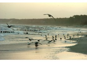 Ustecka plaża w styczniu, fot.SAS