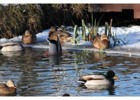 Zoo Charlotta zimą, fot.Włodzimierz Wolski