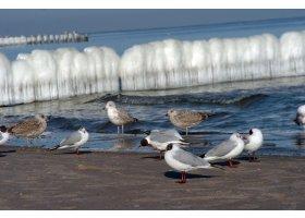 Zlodzona plaża w Ustce