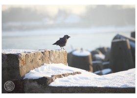 Zima w Ustce, fot.Mariusz Surowiec